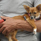 Olympic Games London 2012: small dog